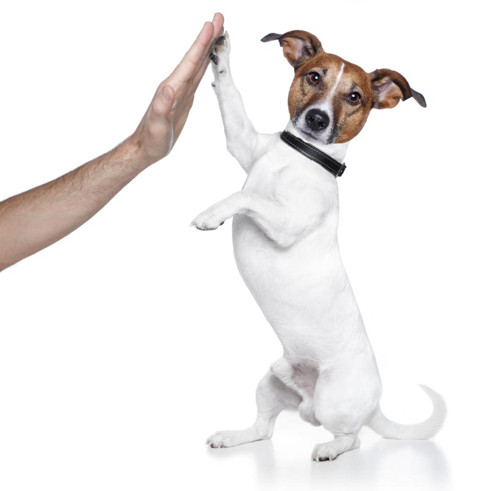 Mobiler Hundetrainer mit Herz